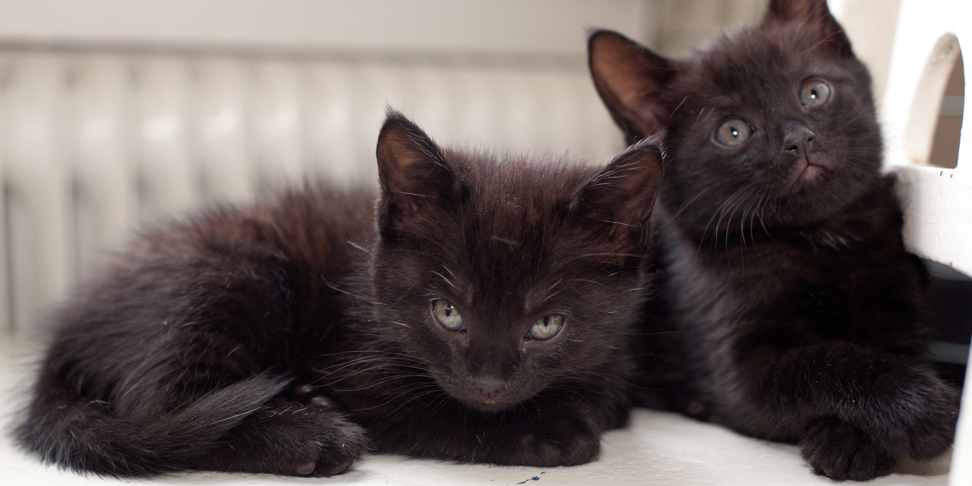 Black Cats Less Than Half As Likely To Be Adopted As Gray ...