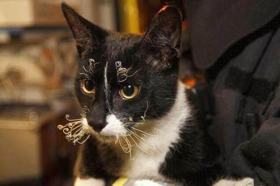 gato tras incendio
