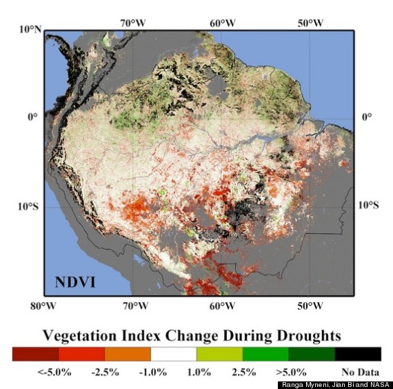 """rain forest destruction essay According to the environmental defense fund (edf), a leading green group, 32 million acres of tropical rainforest were cut down each year between 2000 and 2009—and the pace of deforestation is only increasing """"unless we change the present system that rewards forest destruction, forest clearing will put another 200."""