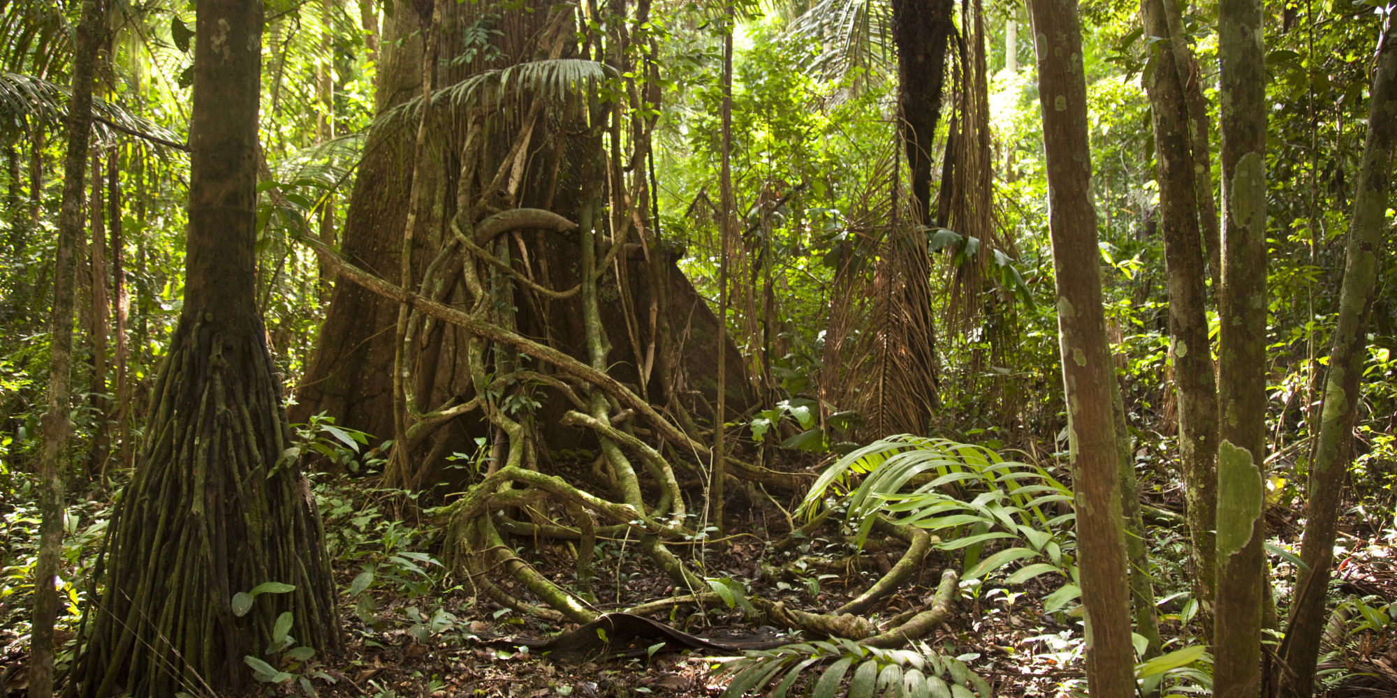The Amazon Rain Forest Is Drying Out Probably Because Of