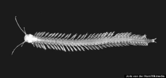 first venomous crustacean