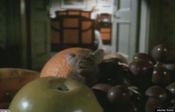 rat in fruit