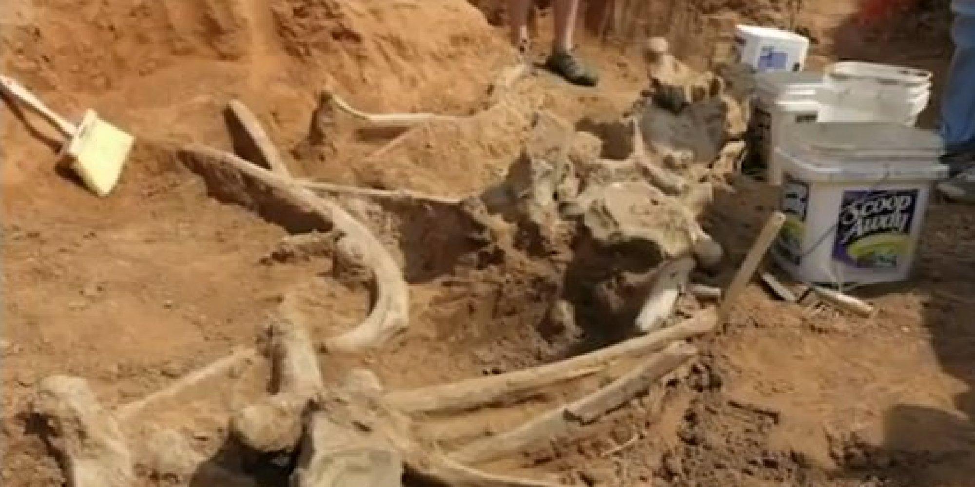 Mammoth Bones Found In Oklahoma Are Dream Come True For