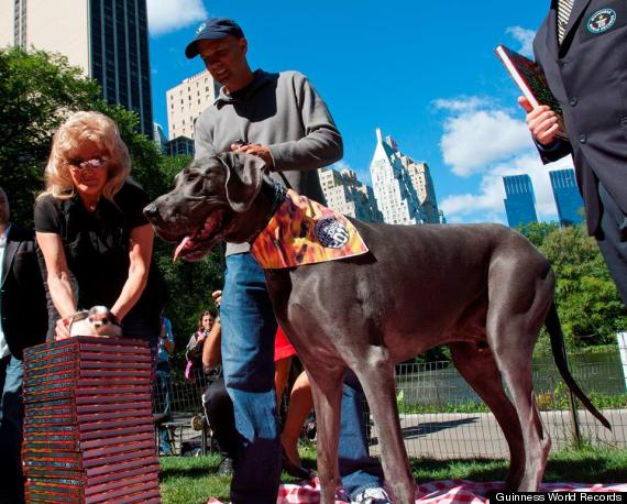 Giant George Dead: Former Guinness World's Tallest Dog ...