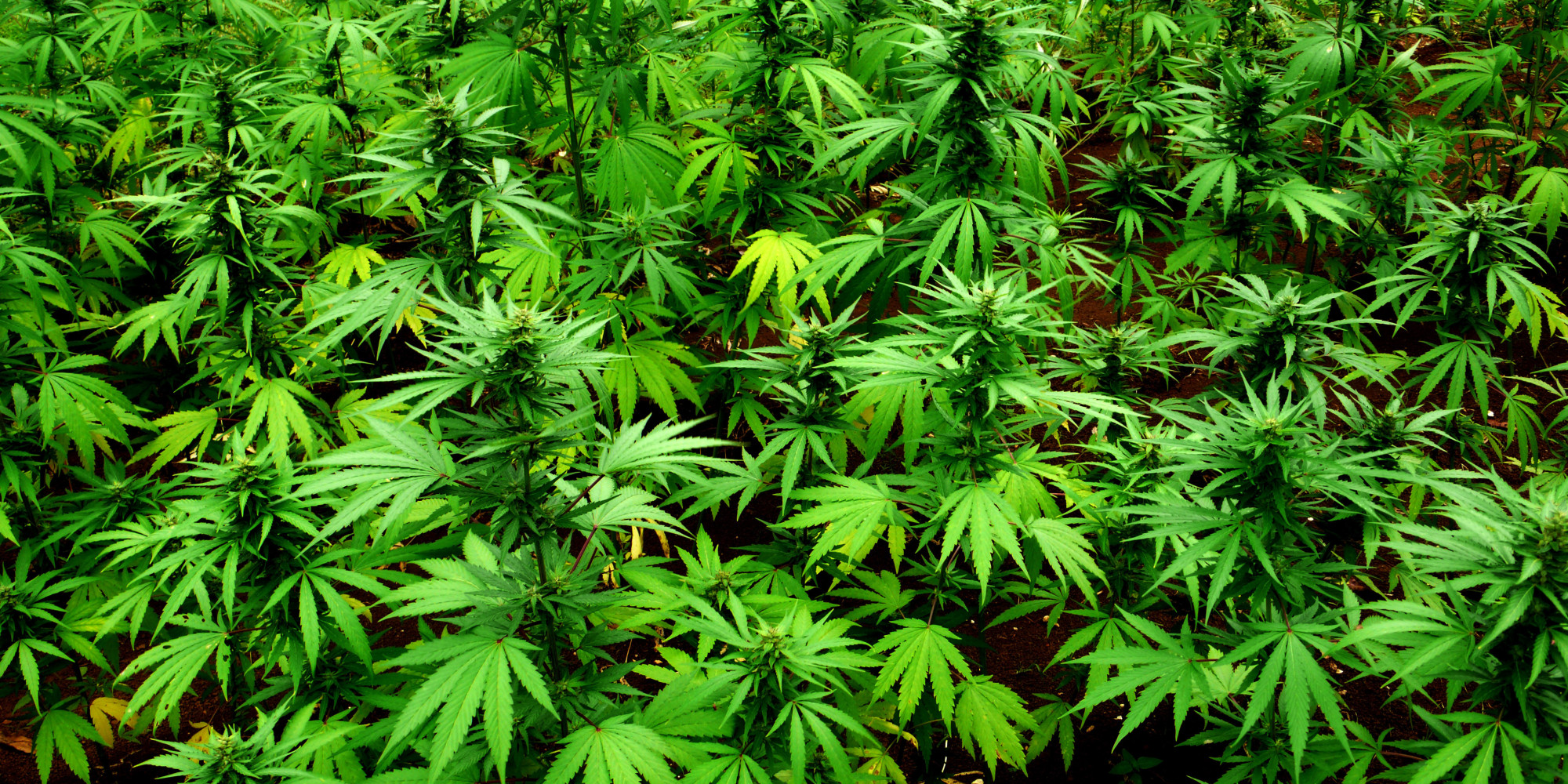 this is why marijuana should be legal everywhere the huffington post