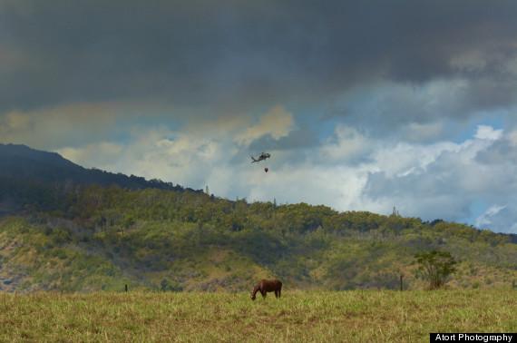 waialua wildfire