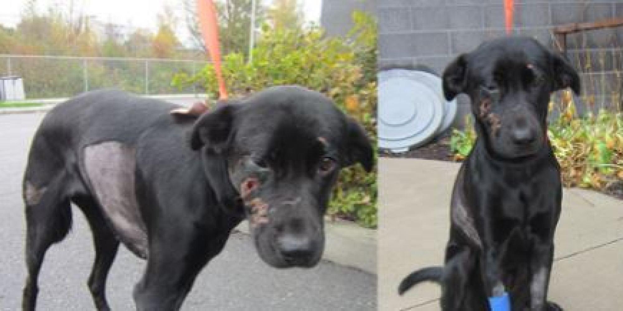 Politics And Debt Limit >> Breezy, Ottawa Dog, Beaten Viciously, Left In Dumpster To Die