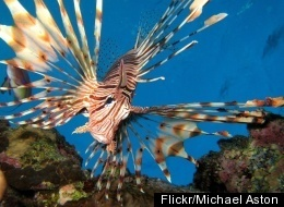 The Colorful World Of Tropical Fish (PHOTOS)