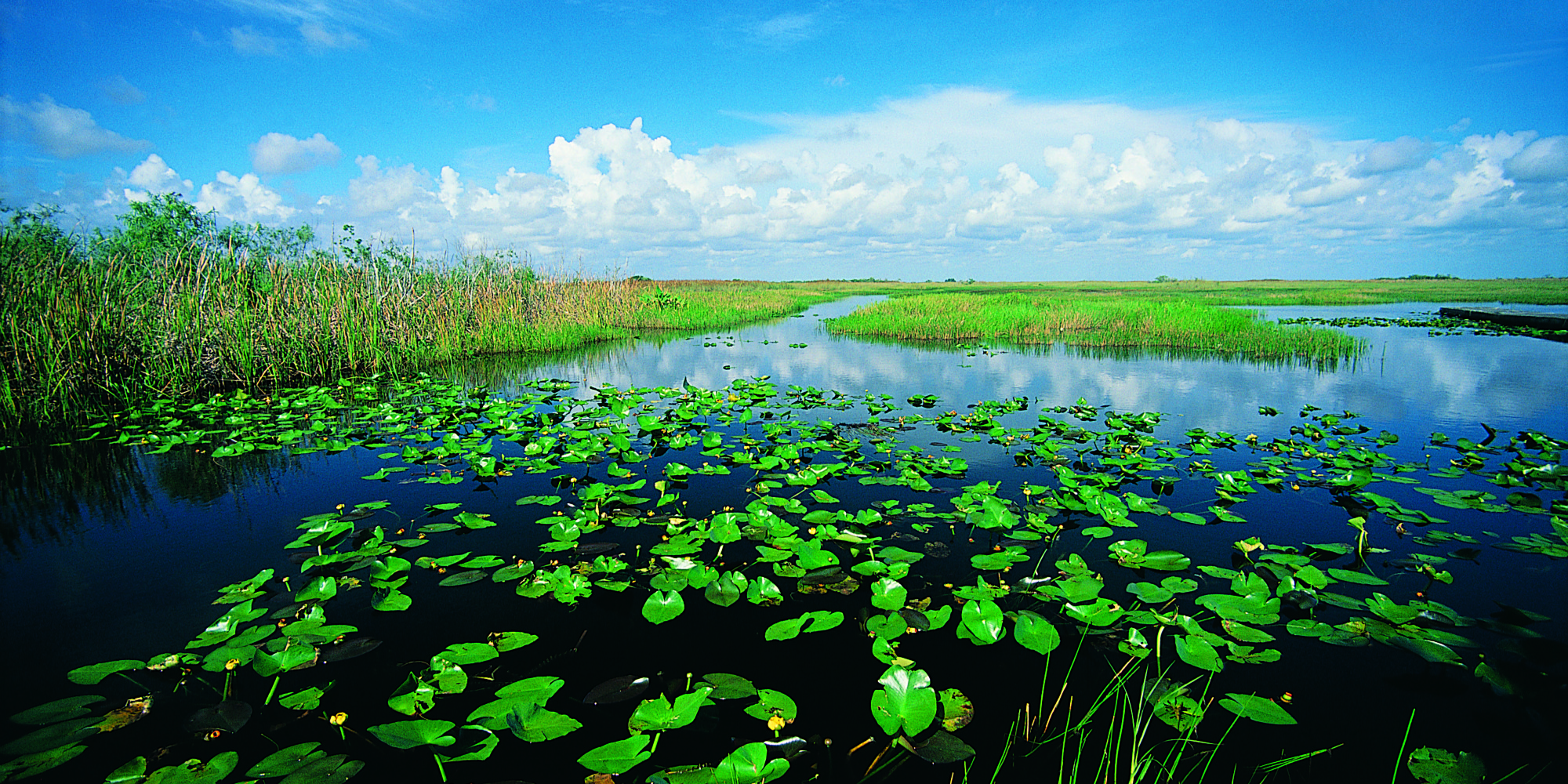a look at the problem threatening the florida everglades Florida's vast everglades region is a unique and world-famous wildlife resource   in addition to the direct threats to wildlife posed by these human activities,.