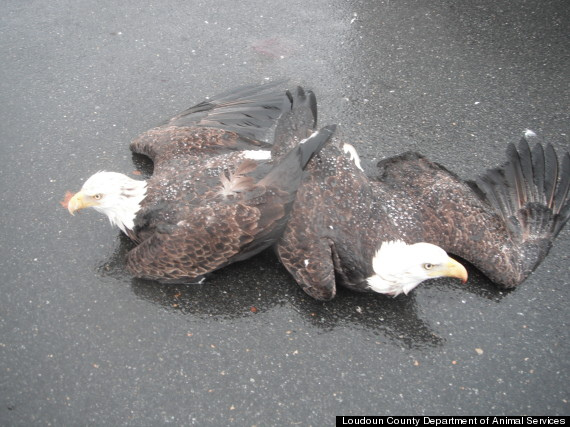eagles stuck together