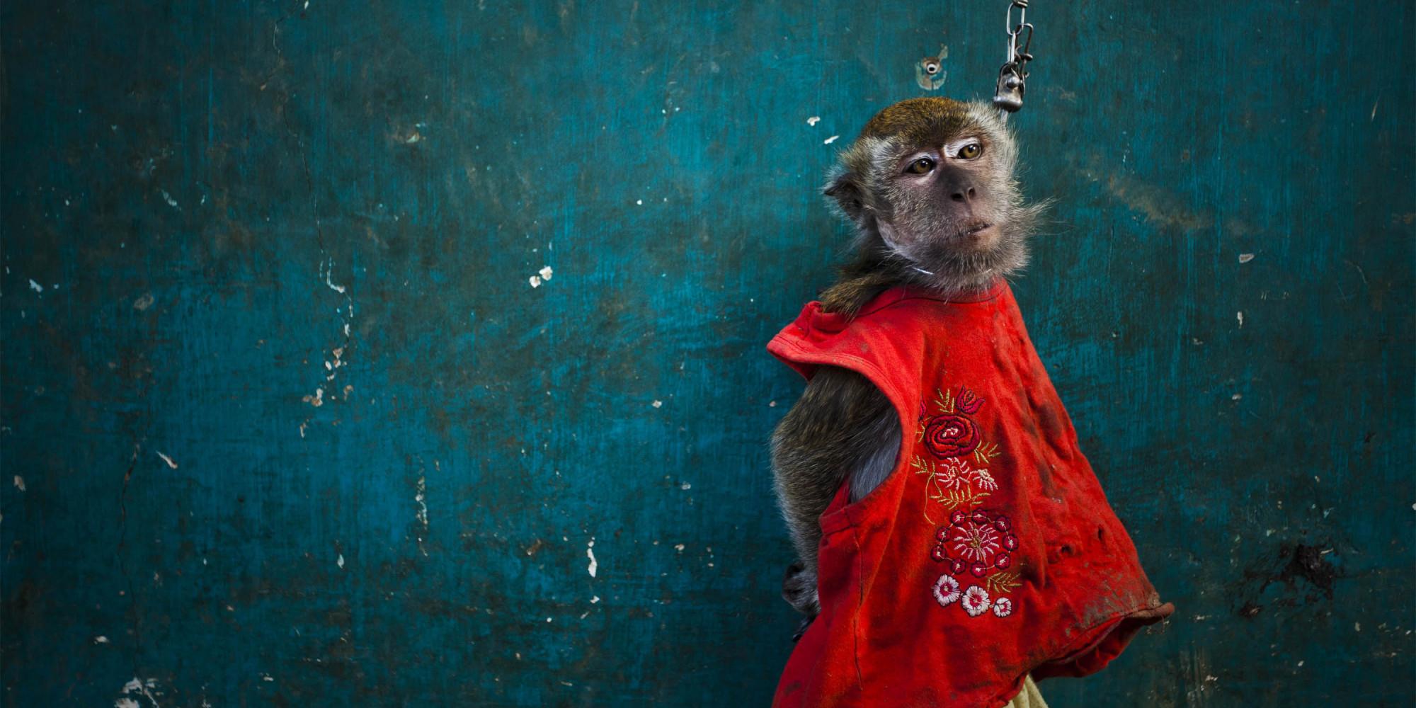 Animal Abuse Monkeys to Stop Animal Abuse
