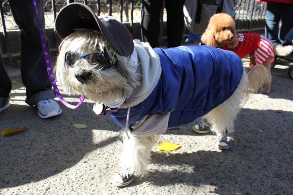 bball dog