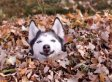 Dogs Playing In Leaves Compilation Makes It Fall For Real