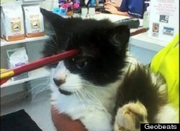 Cat Survives Getting Shot With Arrow (PHOTOS)