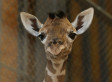 Here's Why Your Facebook Friends Have Become Giraffes