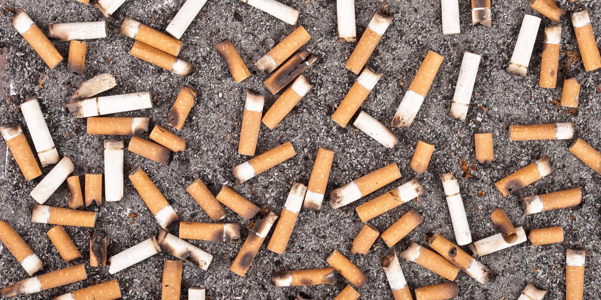 penchons nous s rieusement sur la question des m gots de cigarettes david suzuki. Black Bedroom Furniture Sets. Home Design Ideas