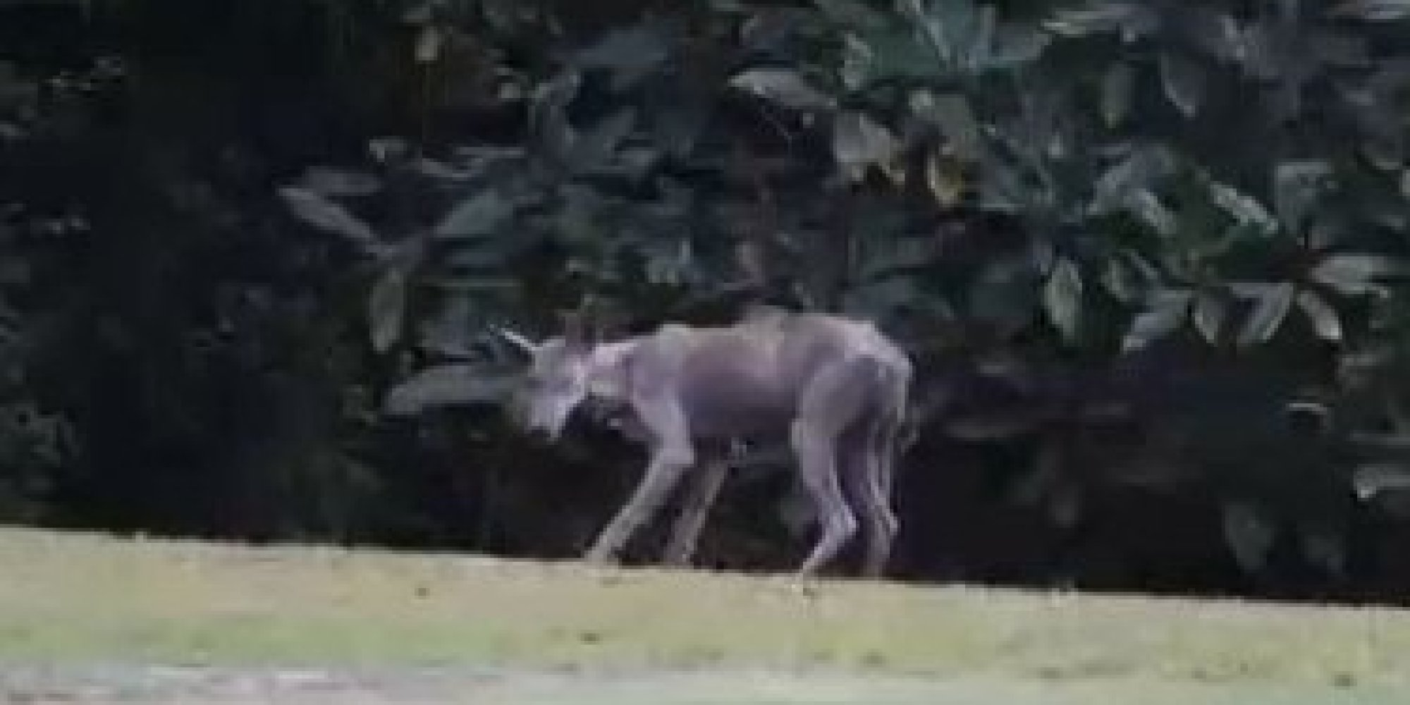 'Chupacabra' In Mississippi Town Reportedly A Coyote With ...