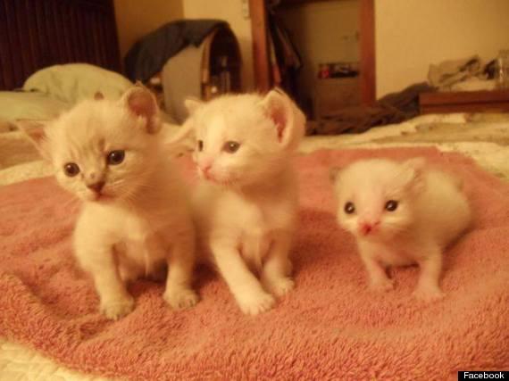 georgie girl kitten