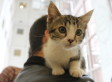 Uber Breaks Hearts With Short Supply Of Kittens On Cat Day