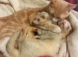 This Cat Bathing And Cuddling Two Ferrets Is Way Too Much To Handle