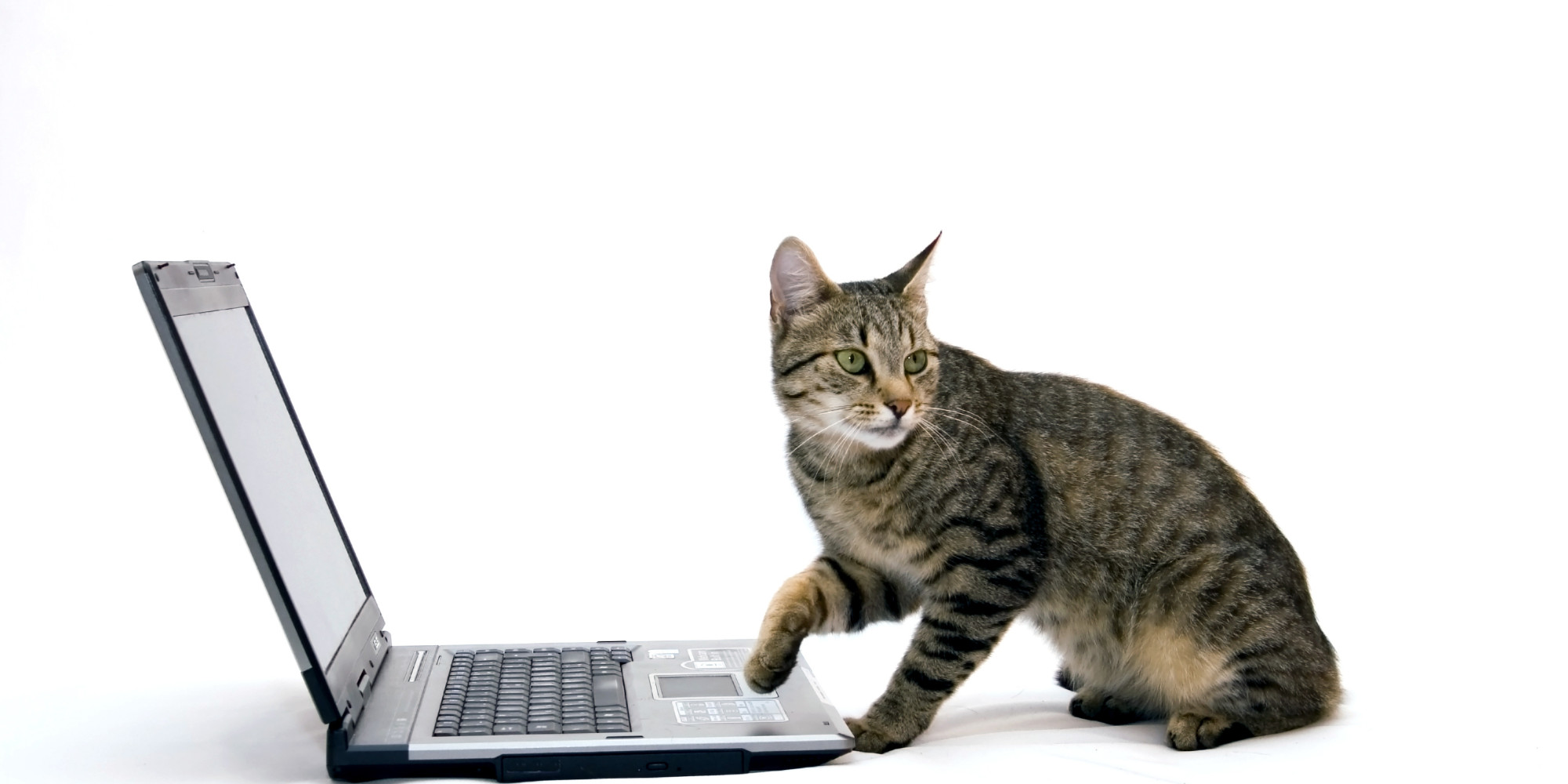 O cat laptop facebook