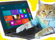 Dell Says Cat Pee Smell In Laptops Is Neither Urine Nor Hazardous