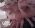S walmart pigs mini