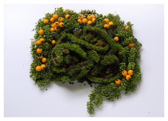 intestins végétal