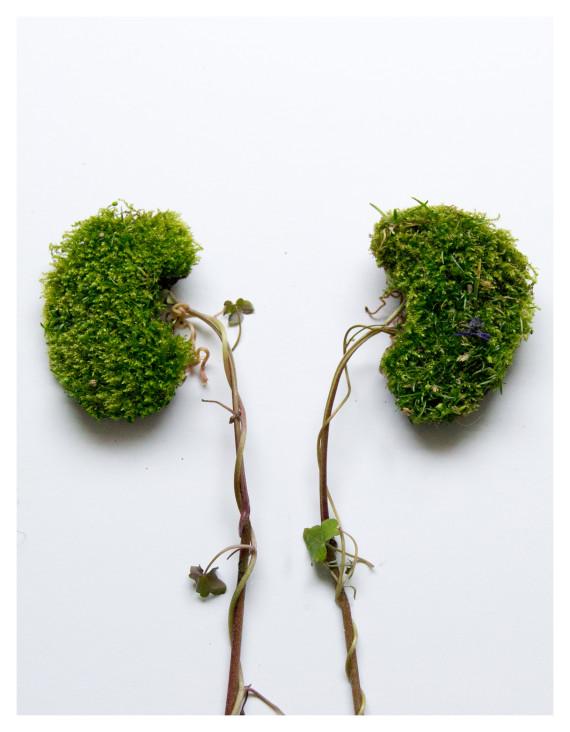 reins végétal