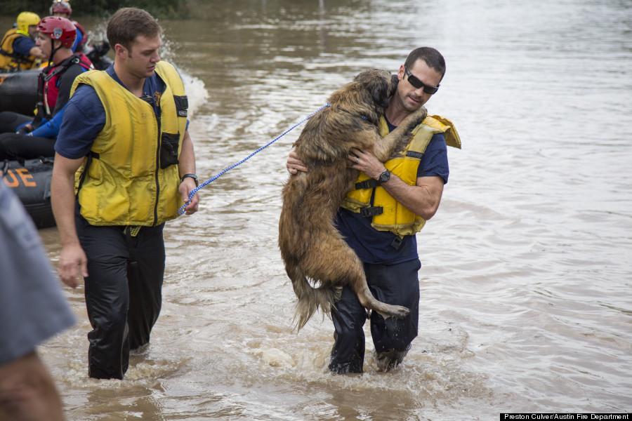 dog rescue