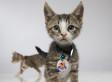 Here's A Sneak Peek Of Hallmark Channel's First Annual Kitten Bowl In 2014 (PHOTOS)