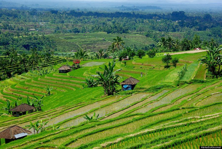 lombok fields