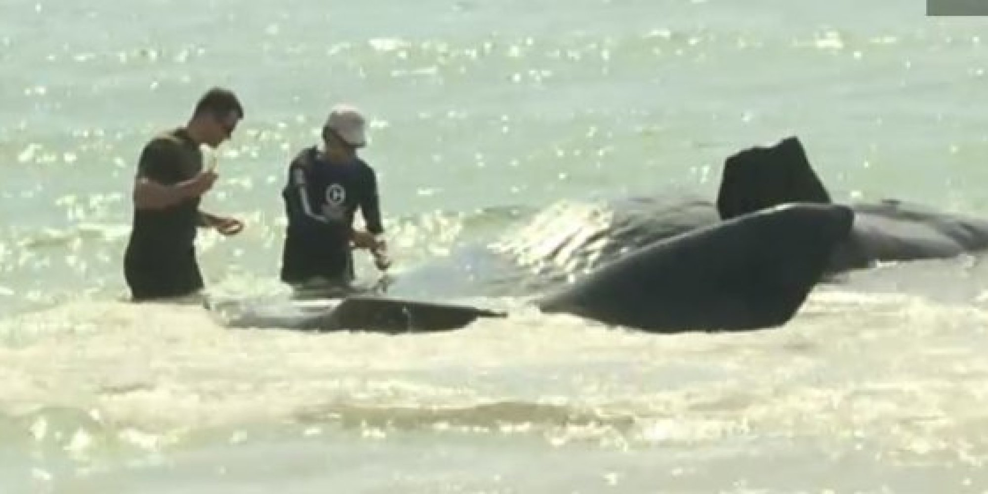 Sperm whales in florida