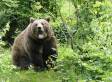 80-Year-Old Russian Man Fights Bear, Gets Thrown Off Cliff, Lives