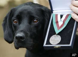 Britain Hero Dog
