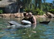SeaWorld Marriage Proposal Gives Us Another Reason To Love Dolphins
