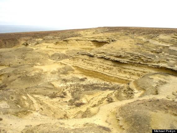 mosasaur fossils
