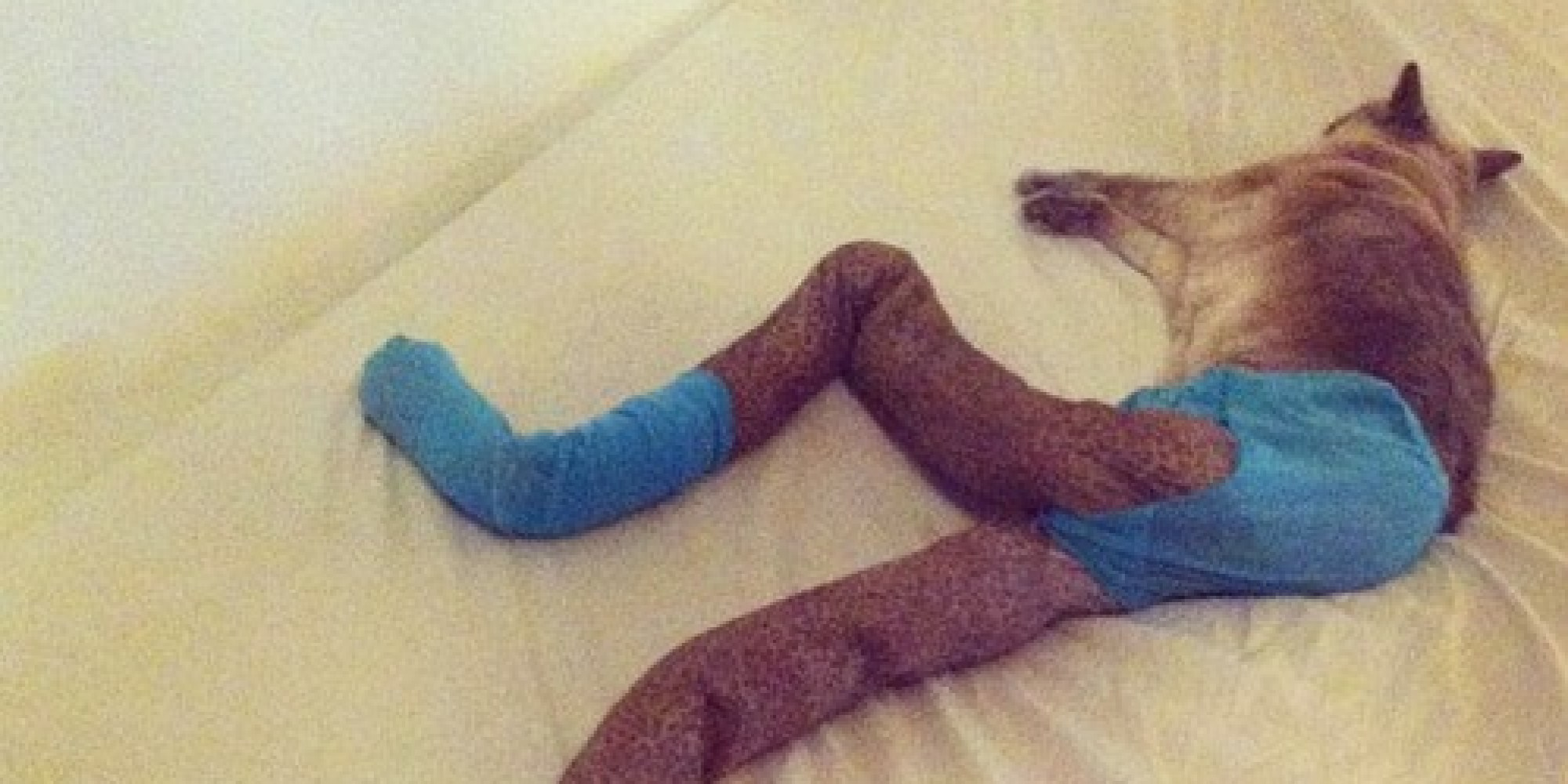 cats wearing tights that is all pictures