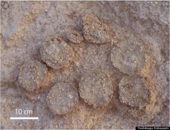 dinosaurs mongolia