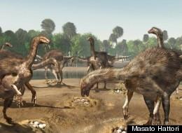 Nests of Weird, Waddling Dinosaurs Found In Desert