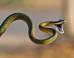 S snakes mini