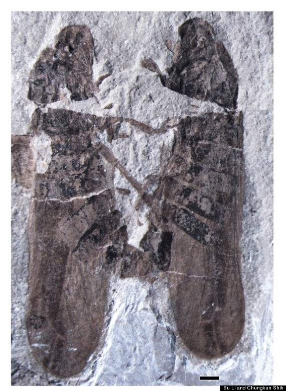 froghoppers fossil