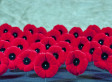 What Fantino Wants Us to Do on Remembrance Day Is Forget