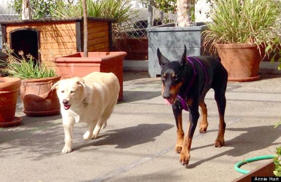 Реабилитация собаки