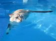 'Cats Who Love Water' Compilation Might Just Be 'Cats Who Are IN Water'... We're Not Sure