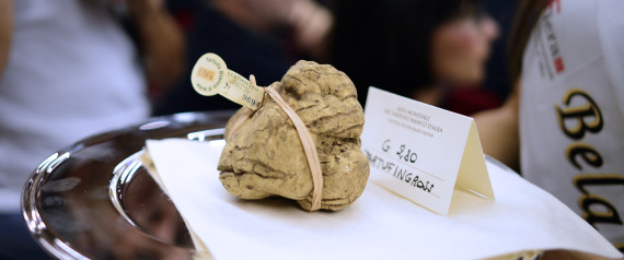 WHITE TRUFFLE AUCTION