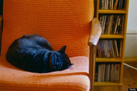 cat curl up