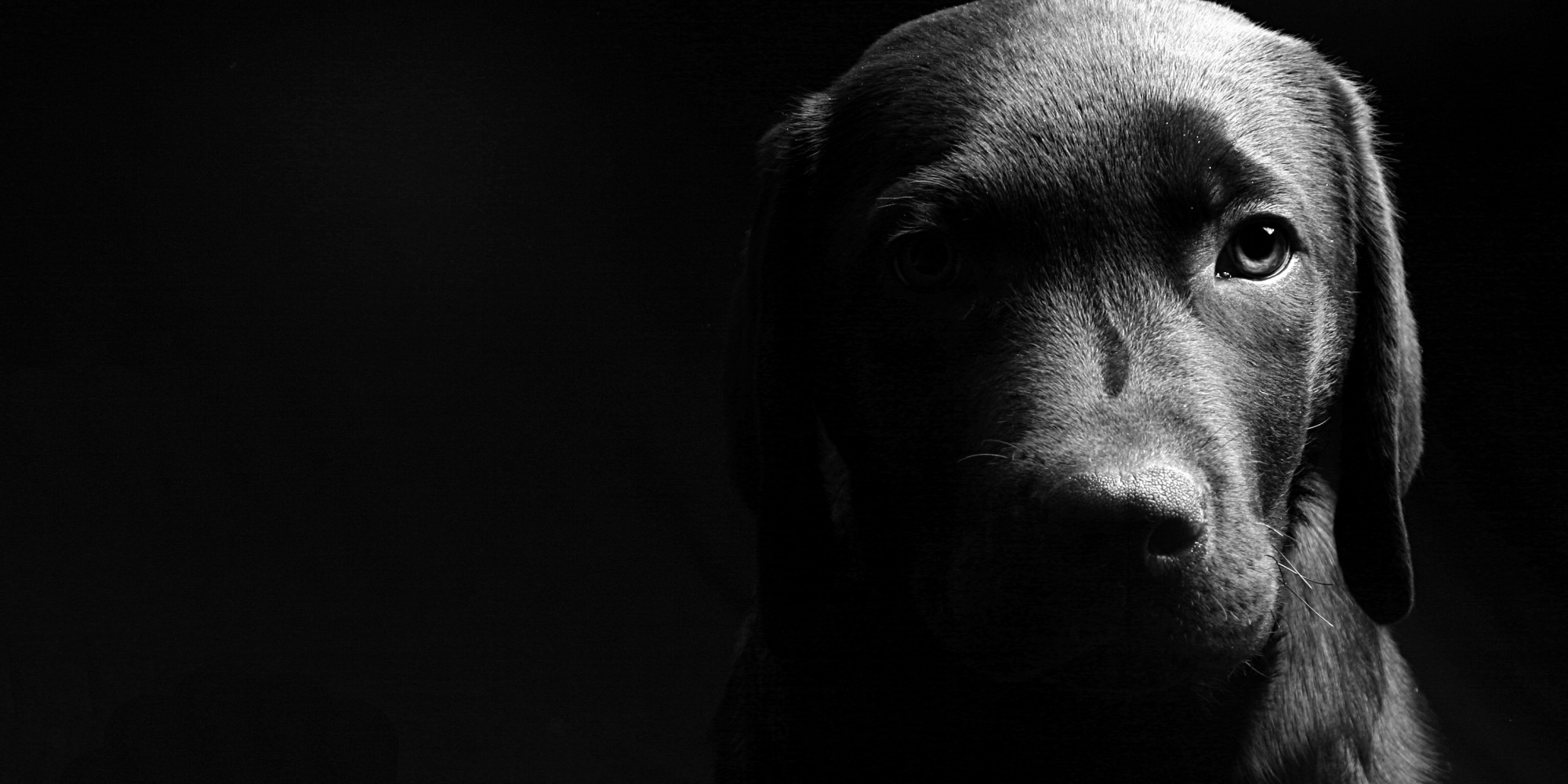 Dog Adoption Animal Aid