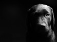 Black Dog Syndrome: Animal Shelters Cut Fees To Aid 'Back In Black' Pet Adoption
