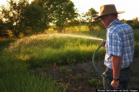 old man gardener rear